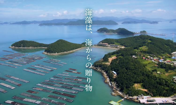 海藻は、海の贈り物